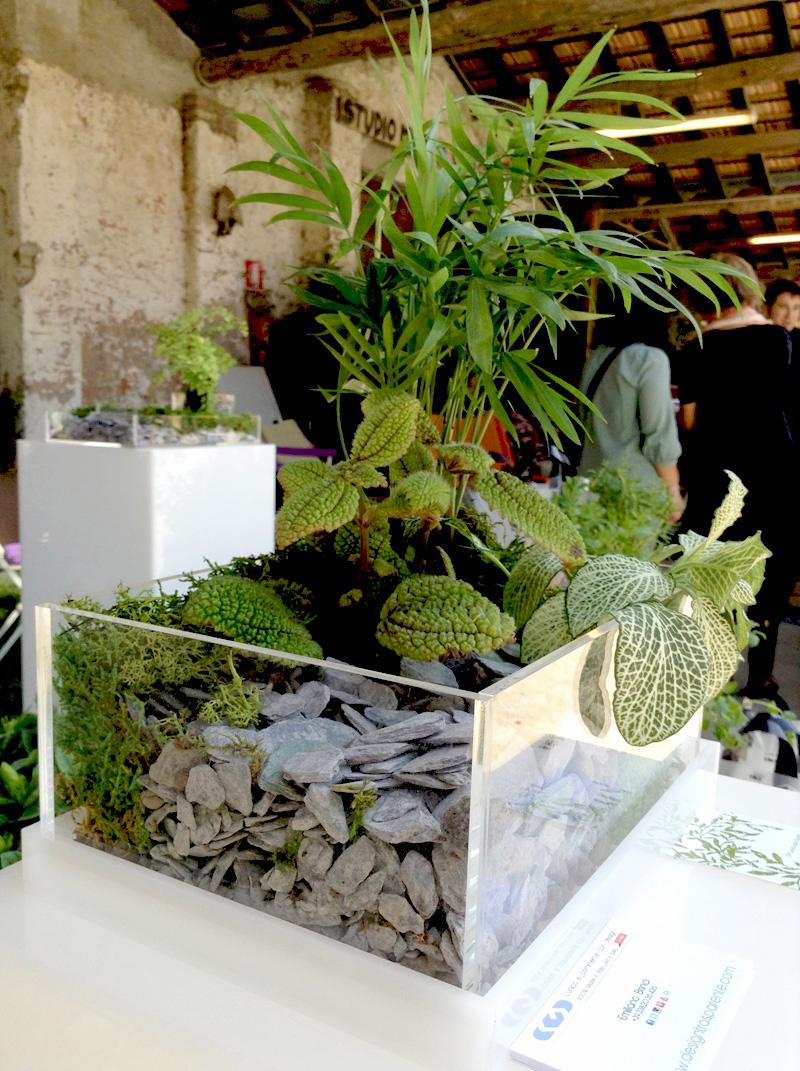 Niwabox i vasi dal design moderno in plexiglass trasparente - Vasi per piante grasse ...