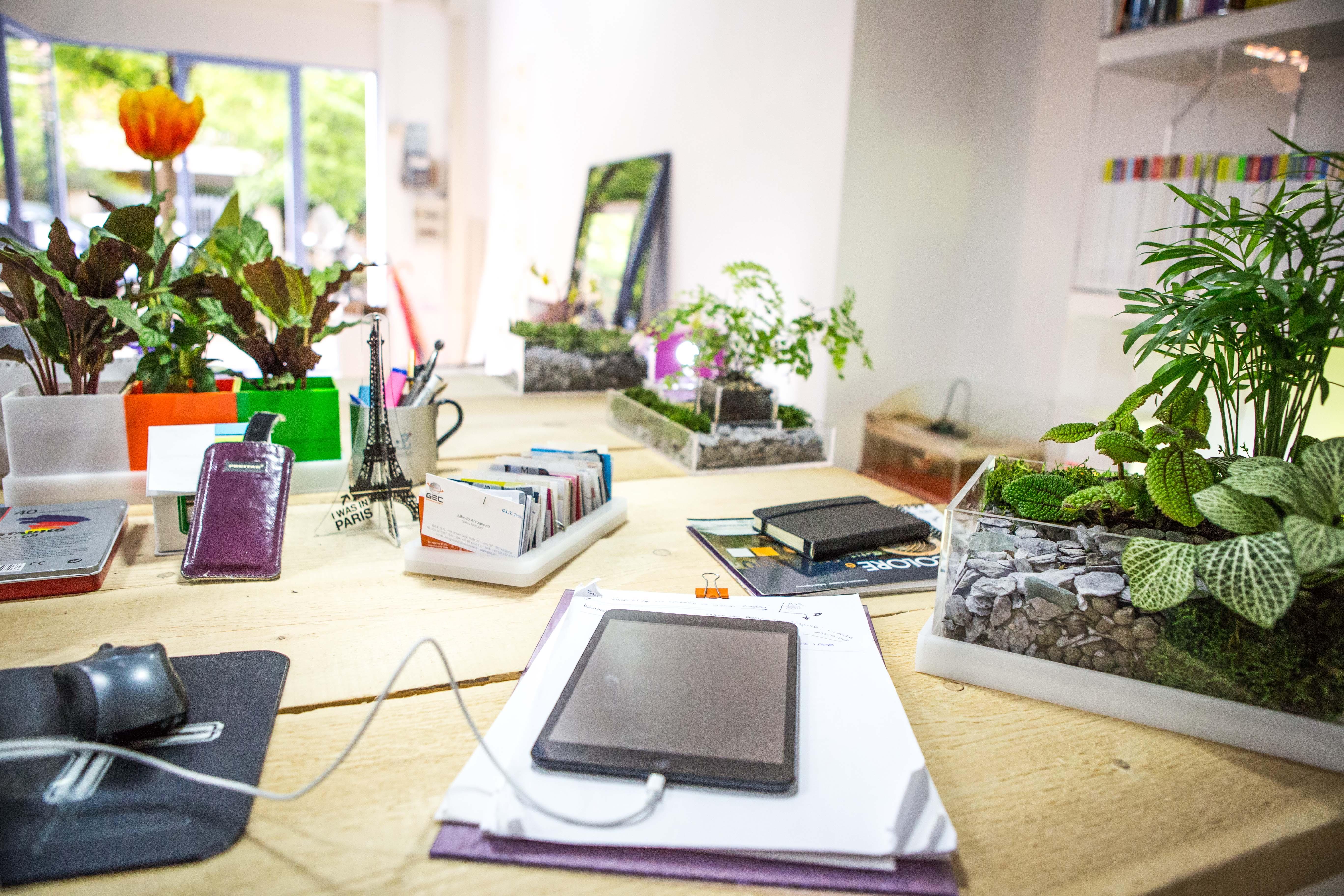 Piante arredamento moderno elegant arredare con le piante for Arredamento outdoor online