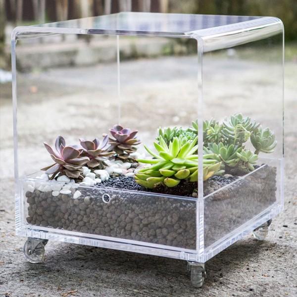 Tavolino plexiglass con composizione piante grasse - Composizione piante grasse da interno ...