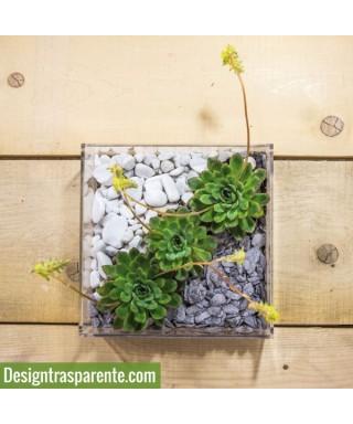Vaso piante grasse - NiwaQ
