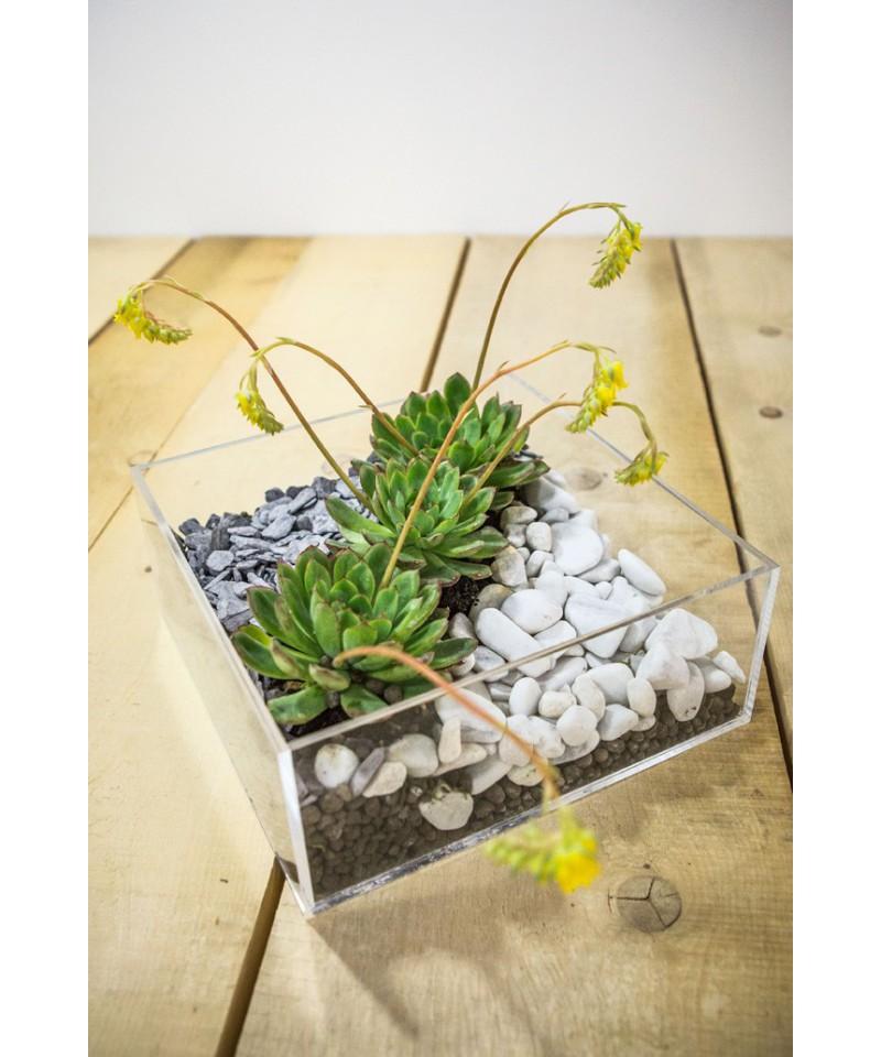 Plexiglass idee originali vaso composizione piante for Composizione di piante grasse in grande vaso