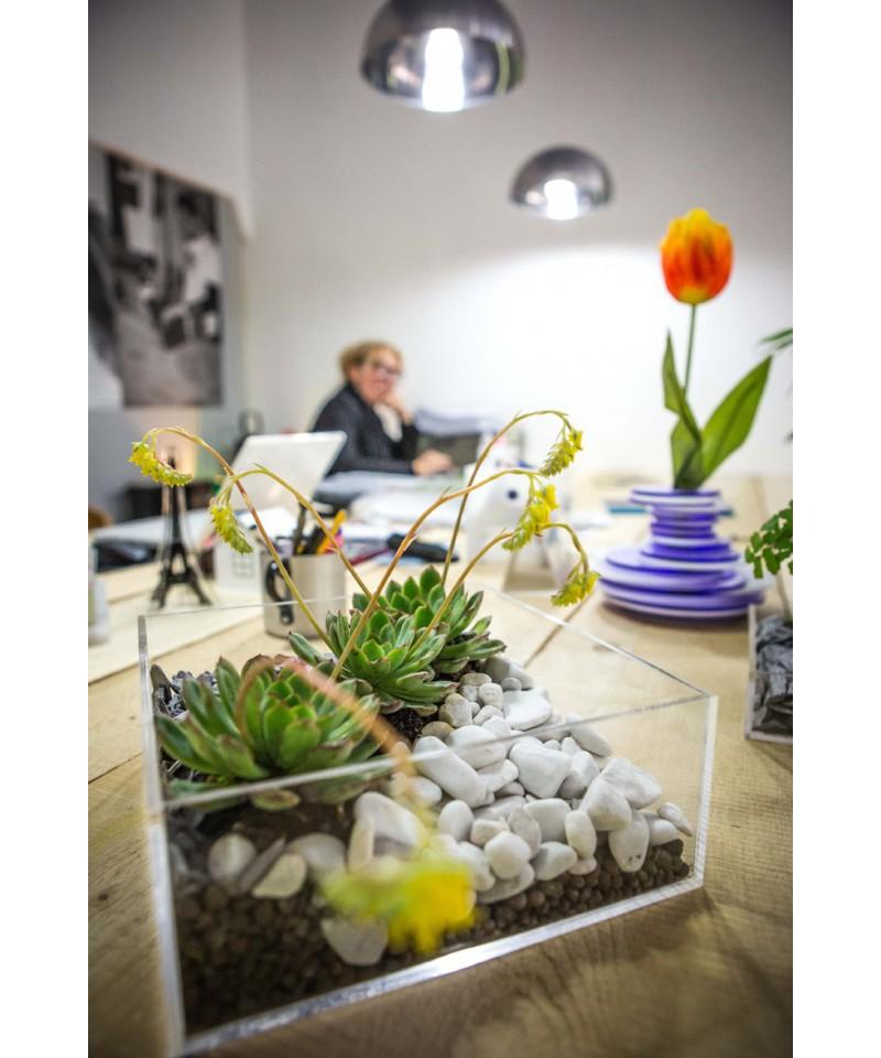 Plexiglass idee originali vaso composizione piante for Tutte le piante grasse