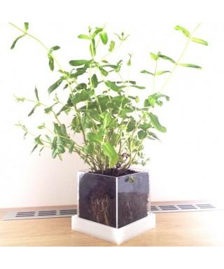 Niwabox- vaso per piante grasse e aromatiche, in plexiglass colorato