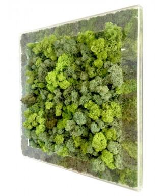 Niwa Frame Vaso e Cornice da parete in plexiglass trasparente